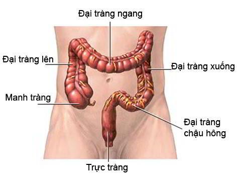 Ung Thu Dai Truc Trang